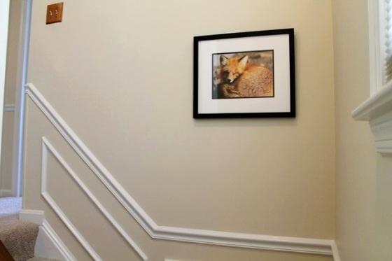 fox in stairway