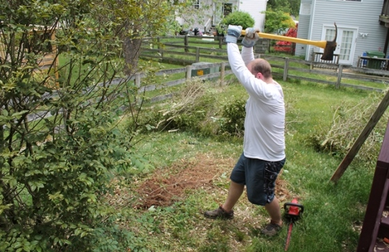 chopping shrubs